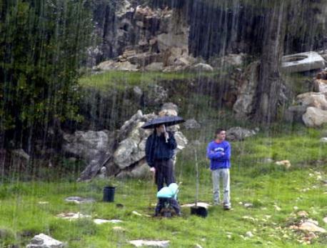 rain_avi_hirshfild458
